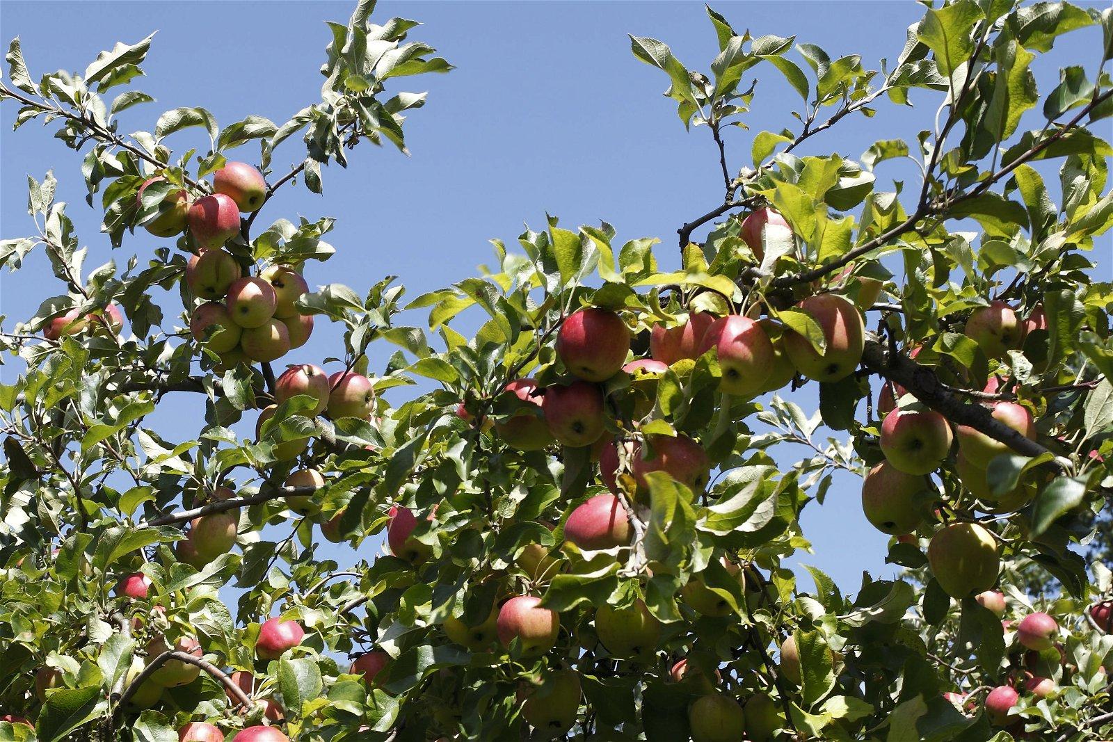 fruits biodynamie