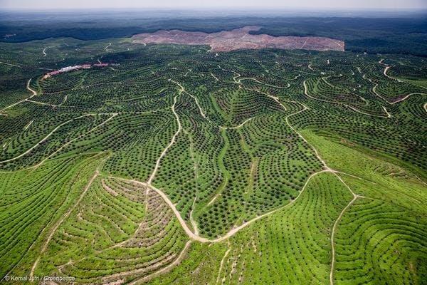 Huile de palme Production Indonésie
