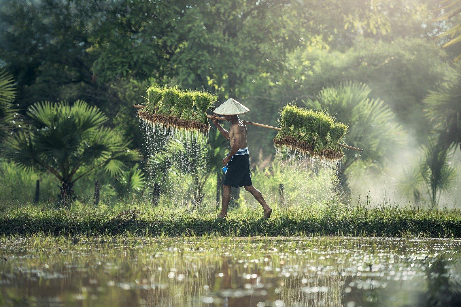 Agriculture bio pour nourrir l'humanité