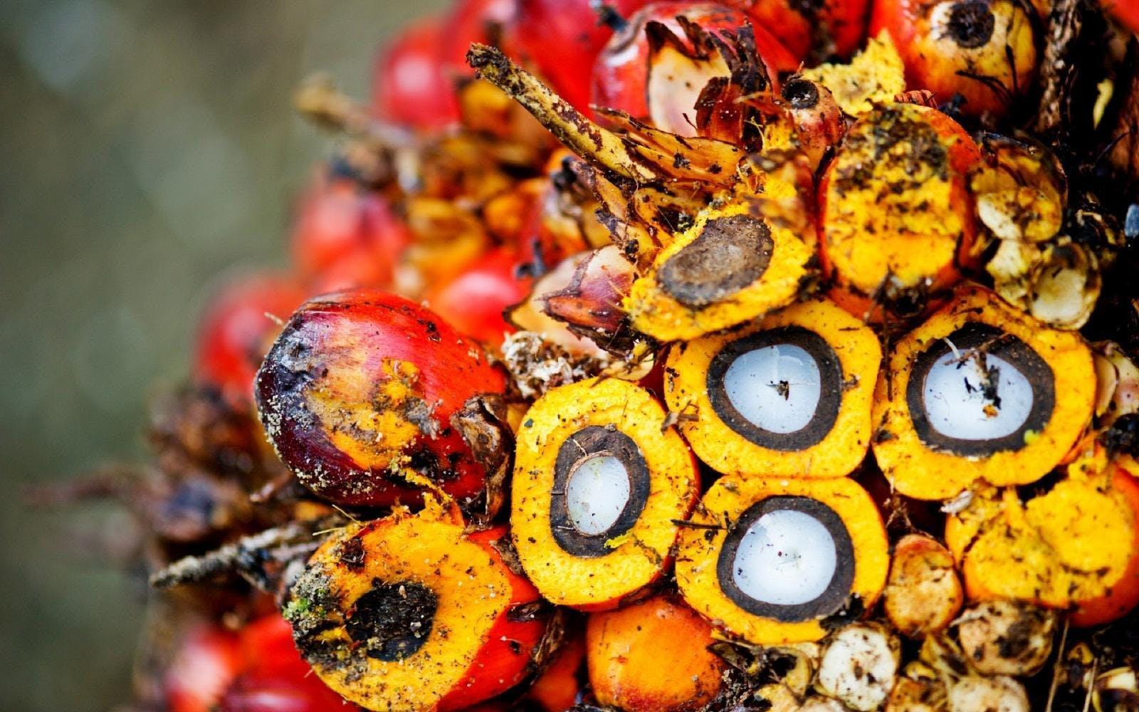 huile de palme